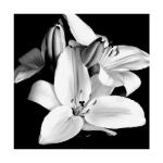 AppFactory Expert PET Film, schwarz, 155 g/qm, A3, 100 Blatt